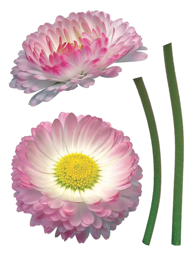 Deco Stickers – Daisy pink / white / green - 50 x 70 cm