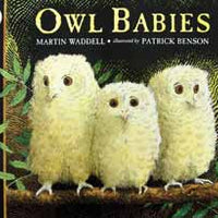Owls Babies Big Book