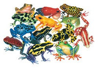 Rain Forest Frogs Floor Puzzle