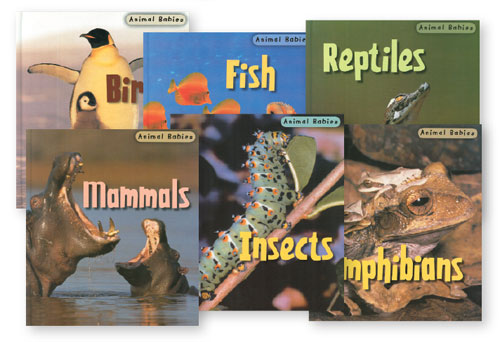 Animal Babies English Book Set