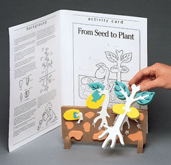 Seed to Plant Model