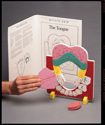 Tongue Anatomy Model