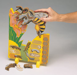 Life Cycle of a Bee Foam Puzzle/Model