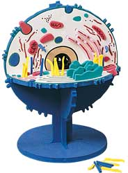 3-D Animals Cell Model