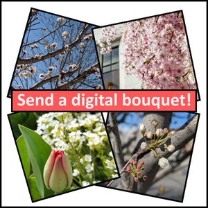 Send a Digital Floral Bouquet: Simple Service Idea