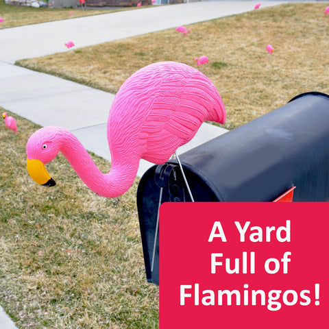 Filling a yard with flamingos