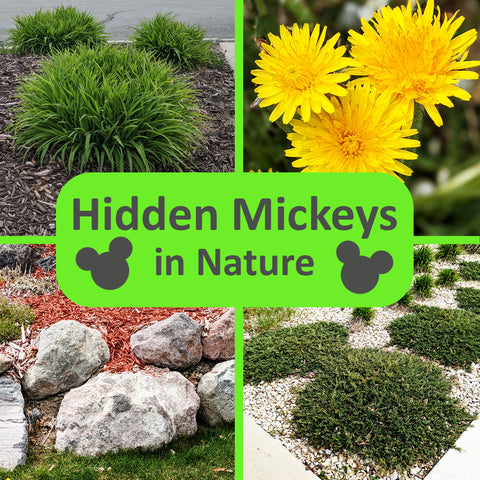 Ultimate guide to finding hidden Mickeys in nature by Family FED