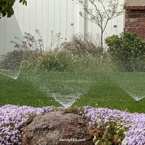 Sprinklers form an abstract hidden Mickey in nature in this guide to hidden Mickeys
