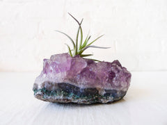 Purple Leaf Air Plant Garden Amethyst Crystal Rock