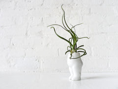 Small Tushiez™ Terrarium - 2.5 INCH Matte or Glossy Air Plant Holder