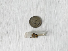 Real Mink Bone Specimen in Tiny Glass Cork Vial Sealed with Wax