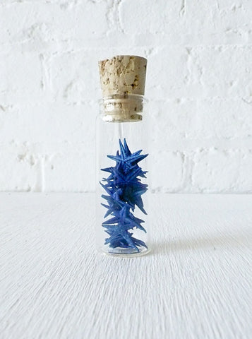 20 Blue Starfish Specimens in Glass Cork Vial