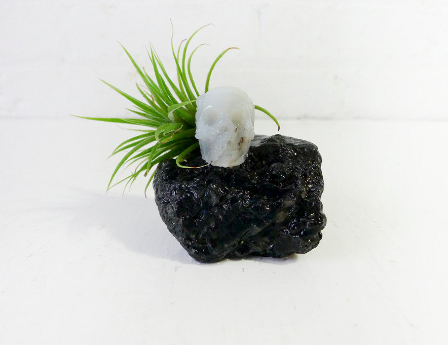 Crystal Agate Skull on Tektite Rock with Air Plant Garden