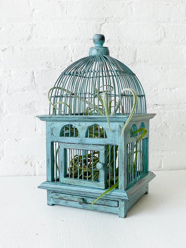 Air Plant in Blue Bird Cage Distressed Teak Live Garden