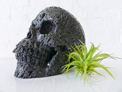 Large Hot Lava Basalt Carved Skull with Live Air Plant Garden