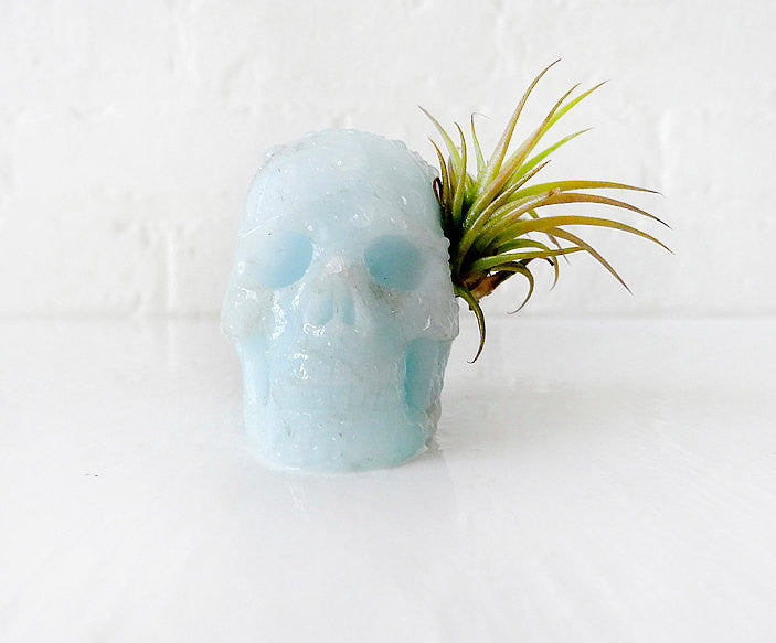 10% SALE Tribal Blue Boy Aragonite Carved Skull Air Plant Garden