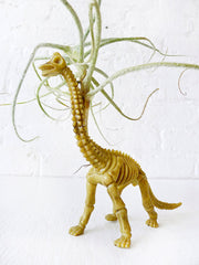 Prehistoric Air Plant Dino Dood - Mr. Bones the Vegetarian Air Plant Terrarium Featured on HBO Girls