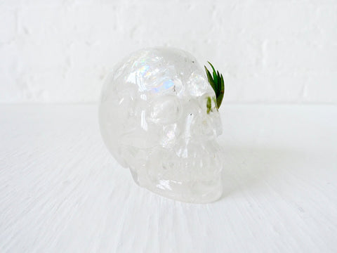 Rainbow Warrior Chief - Quartz Crystal Carved Skull Air Plant Garden
