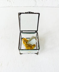 Beveled Glass Jewelry Box Spotted Sleeping Zanna Butterfly on Gold Citrine Quartz Specimen