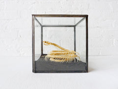 30% SALE Too Late to Save the Baby Cobra Skeleton Preserved in Glass Display Box with Baby Doll