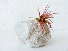 Air Plant Crystal Garden Space Square India Mineral Island with Pink Plant