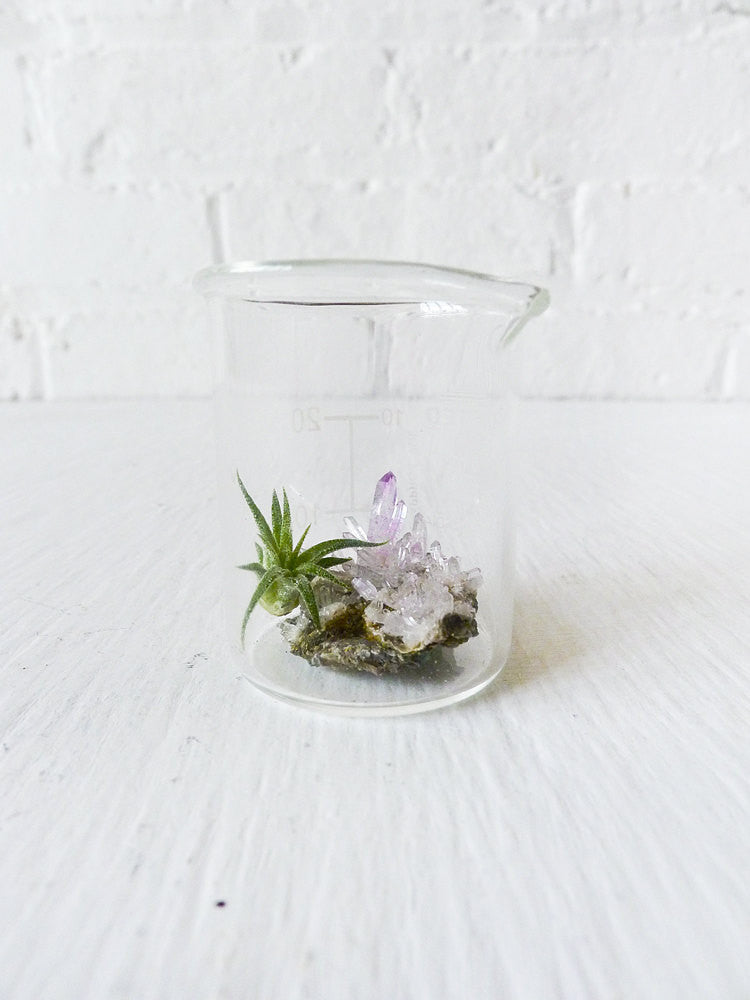 10% SALE Mini Tiny Science Beaker with Magic Matrix Quartz Air Plant Planet Live Inside
