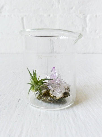 Mini Tiny Science Beaker with Magic Matrix Quartz Air Plant