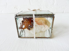 10% SALE Little Miss Seawitch in a Box Octopus Specimen on India Crystal