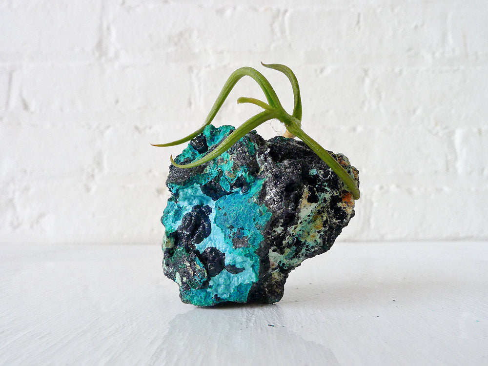 10% SALE Chrysocolla Island Air Plant Crystal Garden