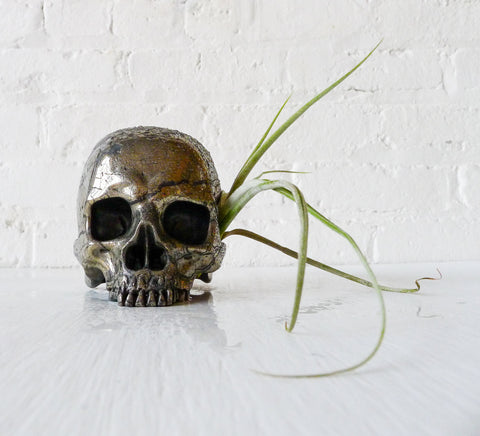Goonie Gold Skull Pyrite Carved Crystal Life Size Air Plant Garden