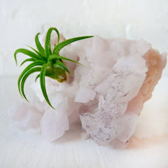 Air Plant Crystal Garden on Pale Pink Calcite Cluster