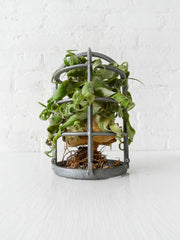 Vintage Industrial Live Air Plant Garden Cage