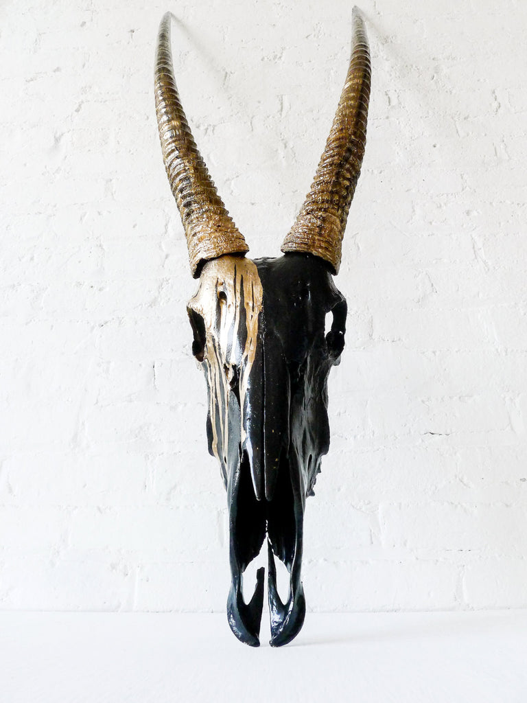 Real Gemsbok Oryx Skull Painted Gold and Black