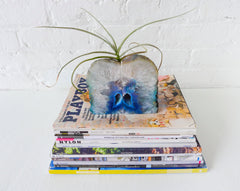 30% SALE Ocean Blue Bookgardendz Crystal Bookends Air Plant Garden Agate Geodes Set of Two