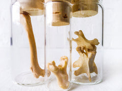 Set of 3 Raccoon Bones in Cork Vials Taxidermy Collectibles