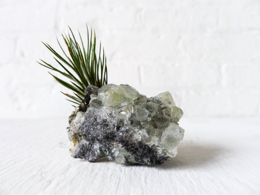 LIVE Air Plant Natural Apophyllite Crystal Garden Unique Home Terrarium
