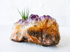 Amethyst Citrine Air Plant Garden with Chunky Druze Points