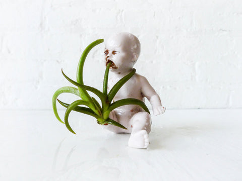 Garden Baby Antique German Bisque Doll w/ Air Plant
