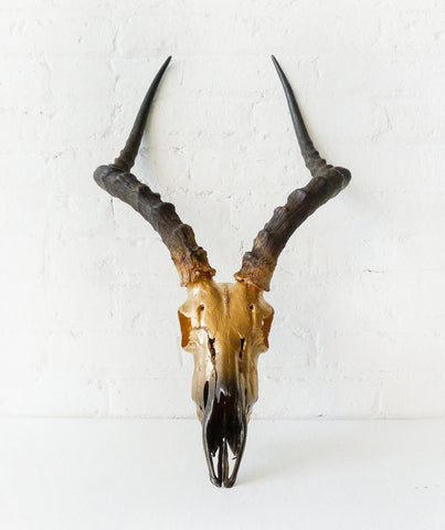 Real 24K Golden Gazelle Skull - Ombre Gold Painted Details - African Wall Trophy