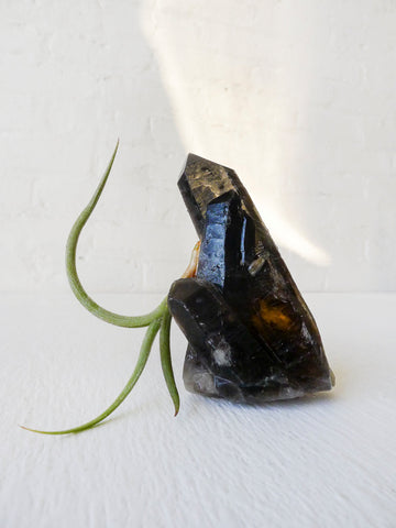 Smokey Black Quartz Crystal Air Plant Garden