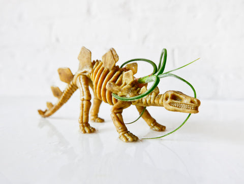 Spike the Stegosaurus - Air Plant Dinosaur Garden