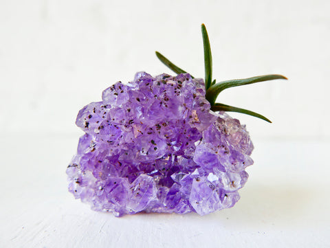 Amethyst Crystal Air Plant Garden - Shiny Druze Geode