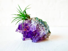 Amethyst Crystal Rock Starburst - Air Plant Garden