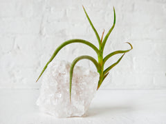 Crystal Quartz Tall Air Plant Garden - Home Garden Terrarium