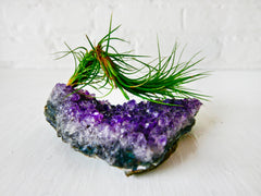 Amethyst Air Plant Garden - Caterpillar AirPlant Shiny Druze Geode