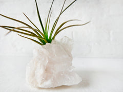 Crystal Quartz Air Plant Garden - Home Garden Crystal Terrarium