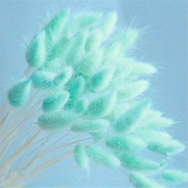 30pcs/Bundle Natural Dry Flower Bouquet Wedding Decoration Home Decoration Bunny Tail Grass Real Flower Party Decorations-C