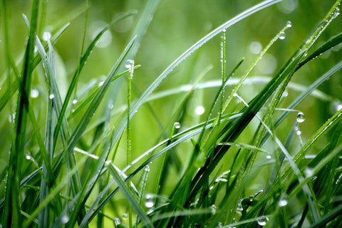 Simple, natural lawn care tips for spring