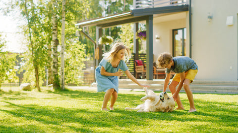 Kids playing on lawn with dog