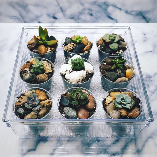 Mini Succulent Set